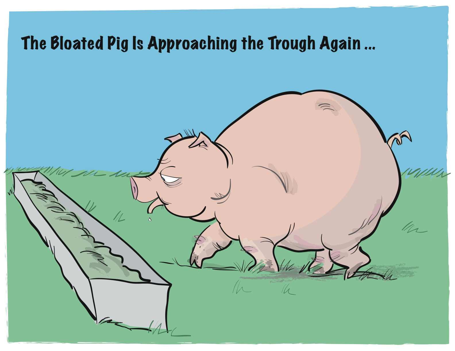 bloated-pig-approaching-trough